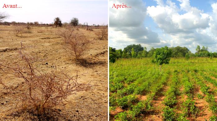 Plantation d'arbres avec Ecosia